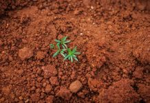 Increase the Quality of Your Soil