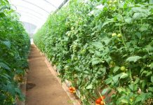 greenhouse to grow vegetables