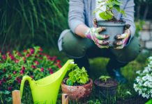 7 Vegetable Gardening Tips Every Gardener Needs To Know