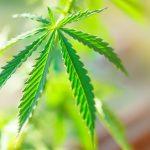 Facts_about_marijuana_consumption2