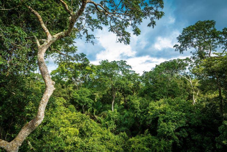 Landscape Protection
