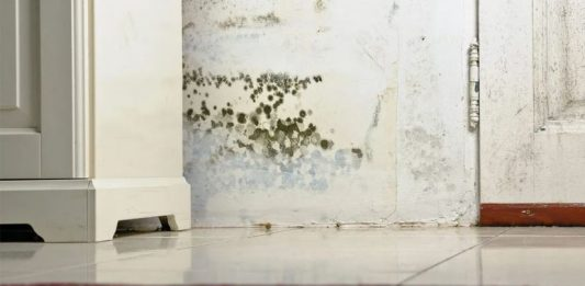 3 Excellent Ways to Kill Mold from Your House