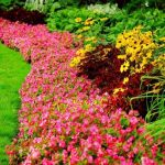 How to Keep Your Flower Garden Healthy