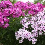 How to Keep Your Flower Garden Healthy 2