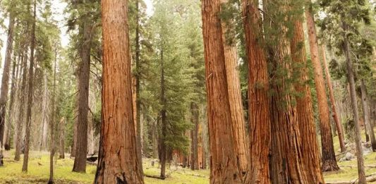 RVs And National Parks Tips On Camping The Parks
