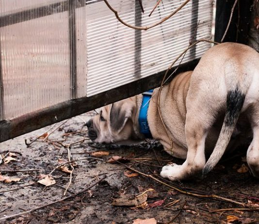 Need a Dog Guard Fence